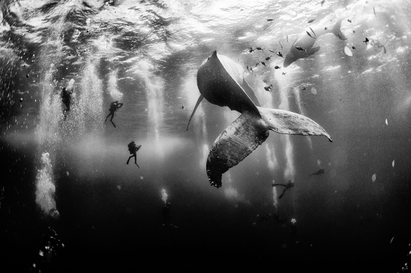 Photo : National Geographic