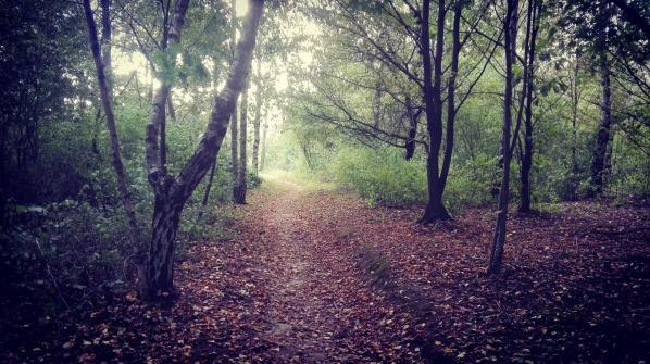 la-hierba-bosque-foto