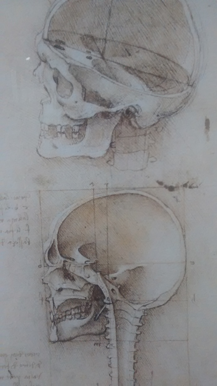 Leonardo Da Vinci, Bocetos